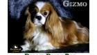 Trixie_Gizmo_Chewy_Mar17_6129