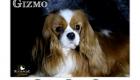 Trixie_Gizmo_Chewy_Mar17_6133