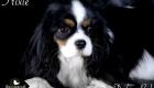 Trixie_Gizmo_Chewy_Mar17_6353