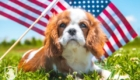 Cavalier_July4th1